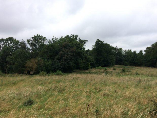 Naturarealer og engområde på Kæmpegård i Klemensker