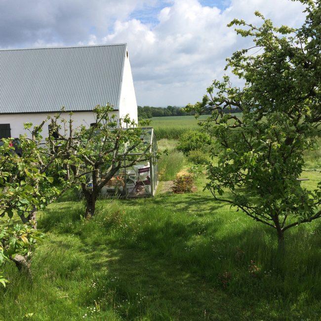 Usprøjtet æble- og frugthave til låns